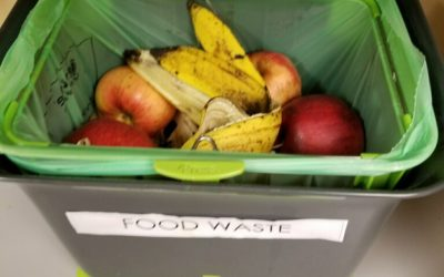 What happens when you place a compost bin in a shared office kitchen?