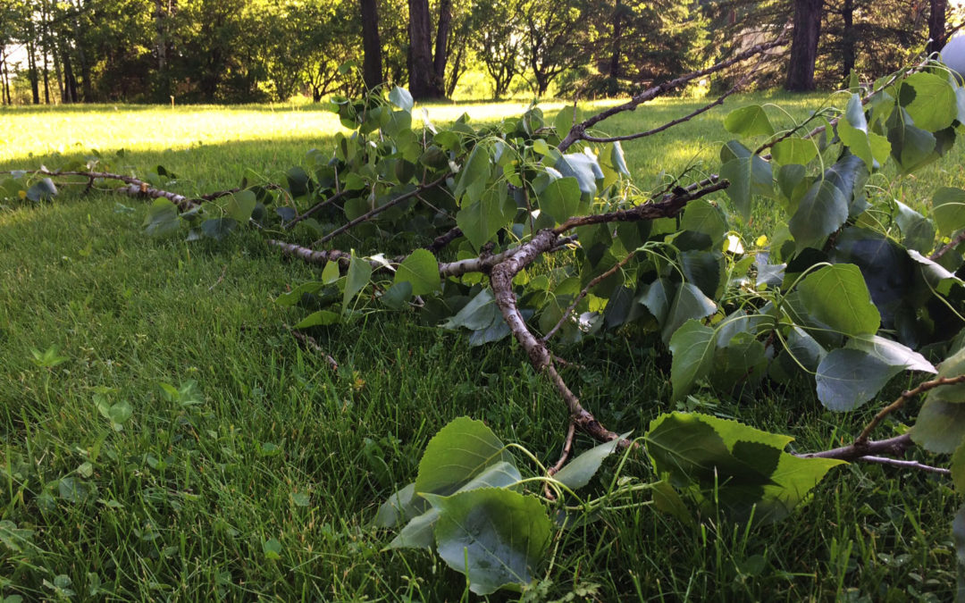 Downed tree storm insurance